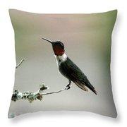 Hummingbird - Just The Tip Throw Pillow