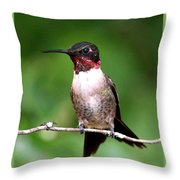 Hummingbird - Male - Will Soon Be Grown Throw Pillow