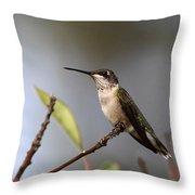 Hummingbird - Ruby-throated Hummingbird - Near The End Throw Pillow