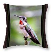 Hummingbird Card Throw Pillow
