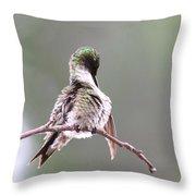 Hummingbird - Cleaning Up Throw Pillow