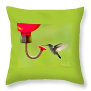 Hummingbird Drinking Throw Pillow