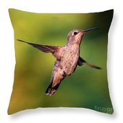Hummingbird Hello Throw Pillow
