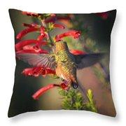Hummingbird In Flight 1 Throw Pillow