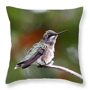 Hummingbird - Little Friend Throw Pillow
