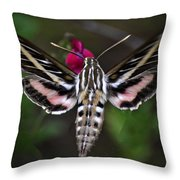 Hummingbird Moth - White-lined Sphinx Moth Throw Pillow