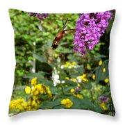 Hummingbird Moth In Flight  Throw Pillow
