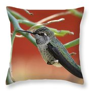 Hummingbird Nap Time  Throw Pillow