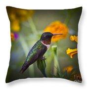 Hummingbird On Guard - Artist Cris Hayes Throw Pillow
