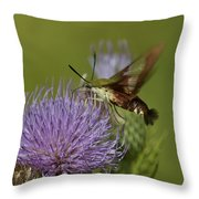 Hummingbird Or Clearwing Moth Din178 Throw Pillow