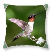 Hummingbird Photo - Light Green Throw Pillow