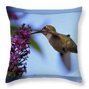 Hummingbird With Blue Border - Digital Painting Throw Pillow