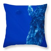 Humpback Whale Singer And Joiner Maui Throw Pillow