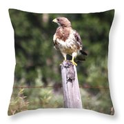 Hungry Hawk Throw Pillow