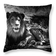 Hungry Lion Throw Pillow