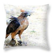 Hungry Red Teiled Hawk Throw Pillow