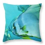 Hunting For Plankton, A School Throw Pillow