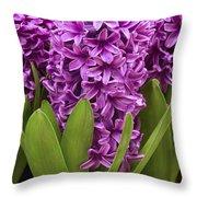 Hyacinth Hyacinthus Sp Miss Saigon Throw Pillow