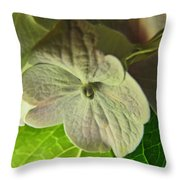 Hydrangea Macro Throw Pillow