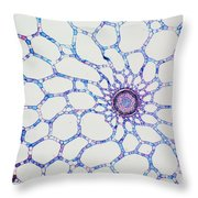 Hydrophyte Stem And Aerenchyma Throw Pillow