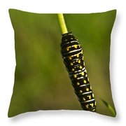 Hymenoptera Larva 2 Throw Pillow