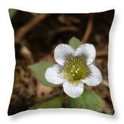 Hyoscyamus Flower Throw Pillow