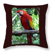 I Am Ready For My Closeup II Throw Pillow