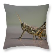 I Am Sexy And I Know It Throw Pillow