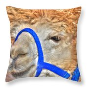 I Know   You Just Lovvvve My Hairdo Don T Ya Throw Pillow