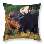 I Wish I Could Fly. Throw Pillow