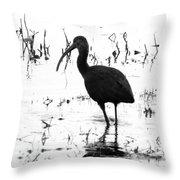 Ibis Pintail Drive Cameron Prairie Nwr Throw Pillow