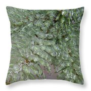 Ice-coated Norway Spruce Throw Pillow