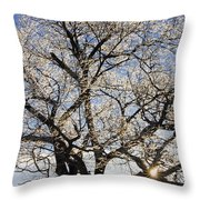 Ice Covered Tree At Sunrise Throw Pillow
