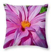 Ice Pink Dahlia Throw Pillow