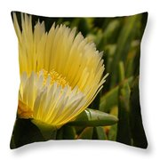 Ice Plant Bloom Throw Pillow