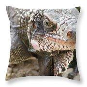 Iguana At Magens Bay Throw Pillow