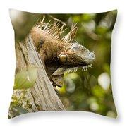 Iguana In Tree Throw Pillow