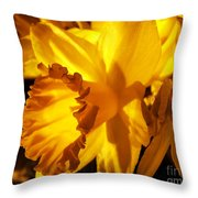 Illuminated Daffodil Photograph Throw Pillow