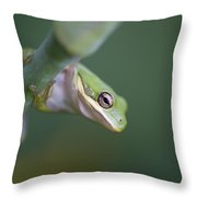 I'm Looking At You Throw Pillow