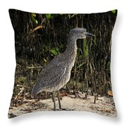 Immature Blacked Crowned Night Heron Throw Pillow