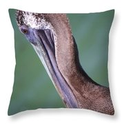 Immature Brown Pelican Throw Pillow