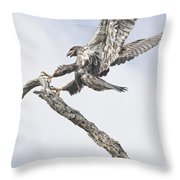 Immature Eagle At Play Throw Pillow
