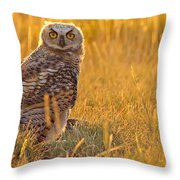 Immature Great Horned Owl Backlit Throw Pillow