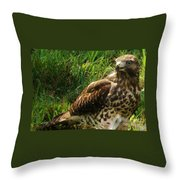Immature Red Sholdered Hawk Throw Pillow
