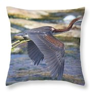 Immature Tricolored Heron Flying Throw Pillow