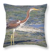 Immature Tricolored Heron Standing At High Tide Throw Pillow