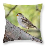 Immature White-crowned Sparrow  Throw Pillow