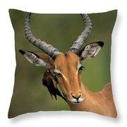 Impala Aepyceros Melampus Buck Africa Throw Pillow