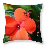 Impatient Ant Throw Pillow
