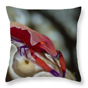 Imperator Commensal Shrimp On Eyed Sea Throw Pillow